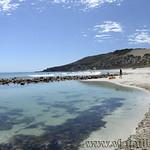 Viajefilos en Australia. Kangaroo 65