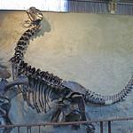 102b- Dinosaur NM