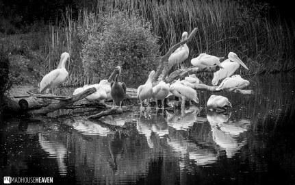 Safaripark Beekse Bergen - 0238