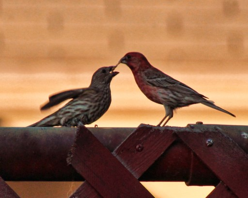 Feeding Baby Bird