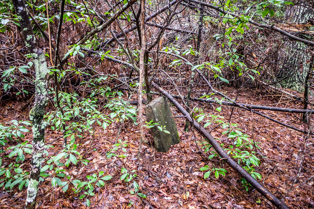 Tall Pines Preserve and South Saluda Church Cemetery-60