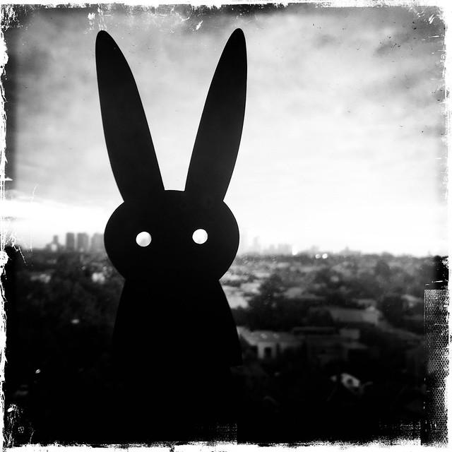 Rabbit Noir