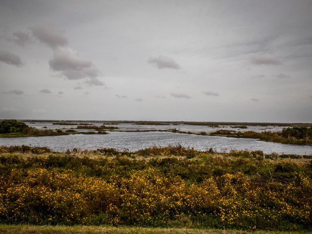 Stick Marsh Birding-007