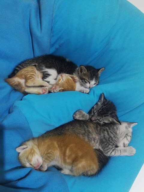 Kittens in the house
