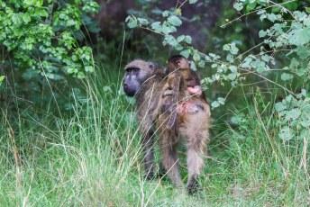 We zagen nog net een paar bavianen wegrennen de bosjes in.