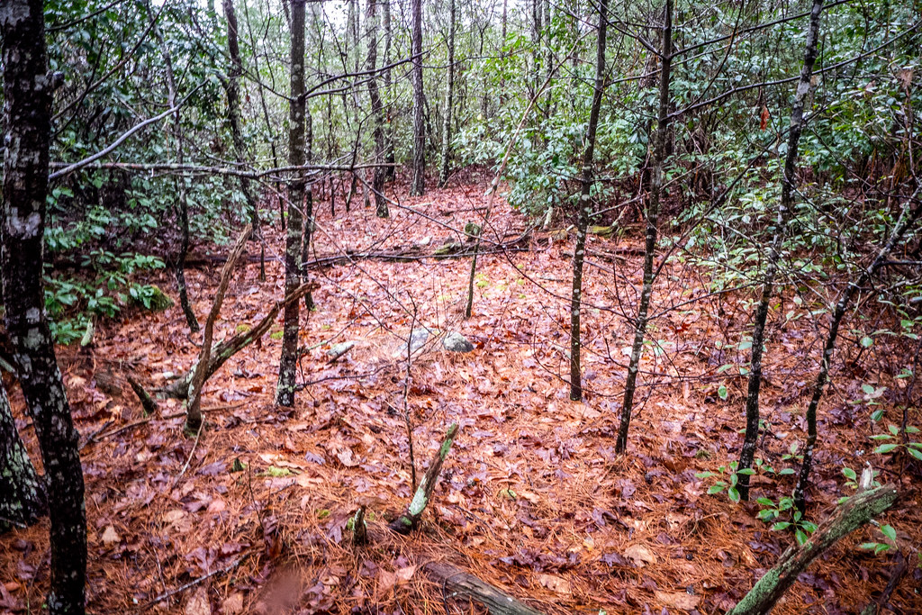 Tall Pines Preserve and South Saluda Church Cemetery-32