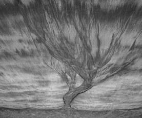 Sand Tree 3