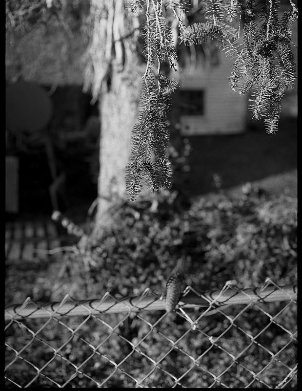 conifer tree, wire fence, single cone, Asheville, NC, Mamiya 645 Pro, mamiya 80mm f-2.8, Pancro 400, ilfosol 3 developer, 2.26.19