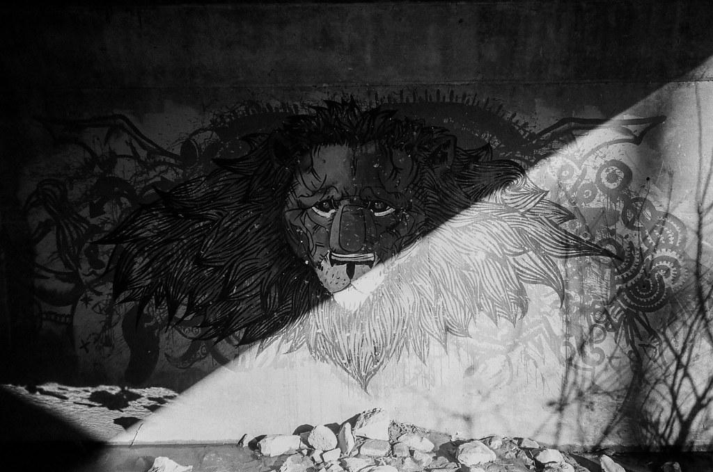 Lion graffiti