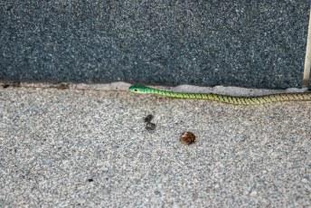 Terug bij de auto vonden we deze joekel van een slang eronder. Lucía was not amused.