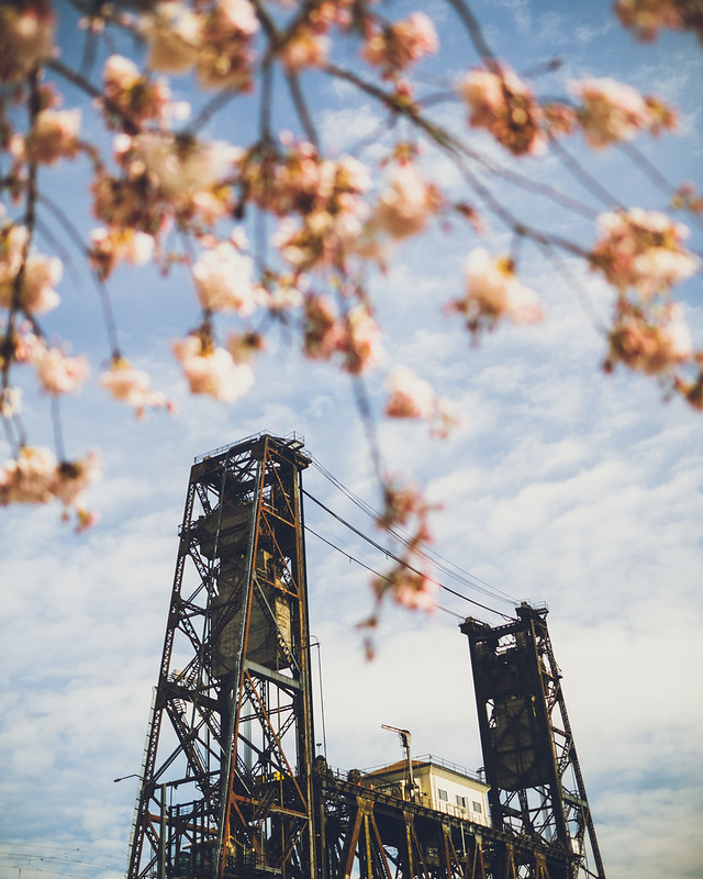 Portland Cherry Blossoms