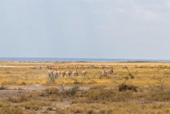 We tuften weer verder langs kuddes zebra's.....