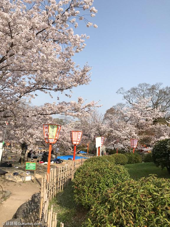 打工度假-賞櫻巡禮-168