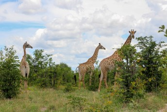 We sloten de safari af met een paar giraffes, en spoedden ons naar de uitgang.