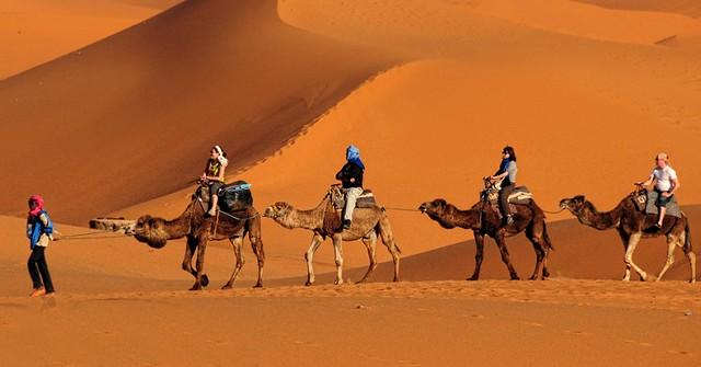 4988 Pilgrims will soon travel from Makkah to Madinah on camel backs