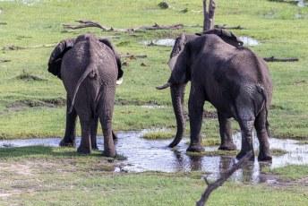 Vanuit het niets doken er ineens een paar olifanten op.