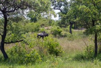 Wij waren daar echter niet voor standbeelden maar voor het Matobo National Park.