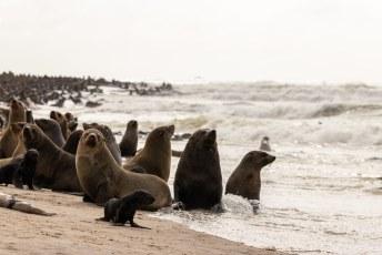 Het zijn sociale dieren in tegenstelling to zeehonden.