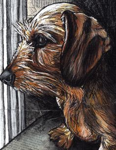 d5eadbaa6e9aa18b72d7a47d91946fdf--special-images-dachshund-art