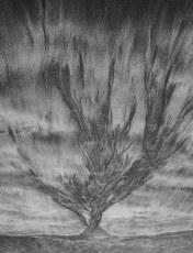 Sand Tree 2