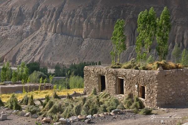 Gerbes d'orge et de foin, Zood Khun, Vallée Chapursan © Bernard Grua