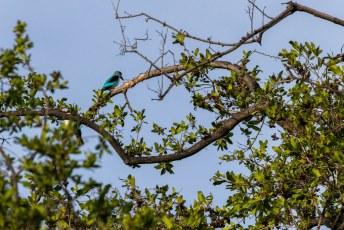 We werden gewekt door de vogeltjes, onder andere deze Senegal IJsvogel.