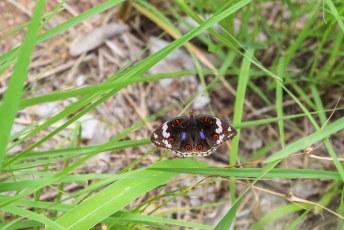 Deze vlinder was niet te beroerd om even rustig te poseren.