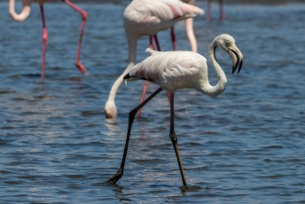 Als er flamingos zijn dan is het water niet geschikt voor bijv. de landbouw.