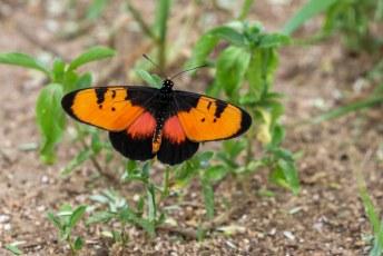 Ook deze vlinder wilde maar wat graag op de foto.