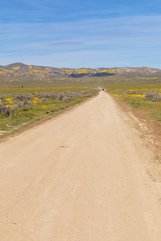 04.06. Carrizo Plain