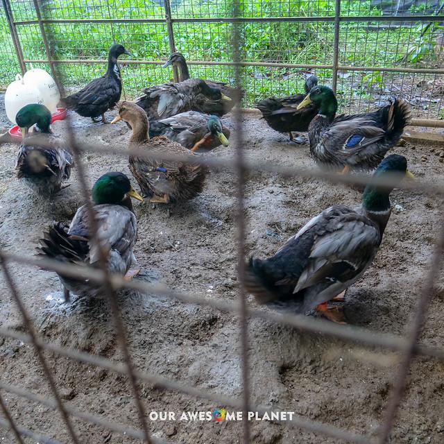 Yoki's Farm 2019-93.jpg