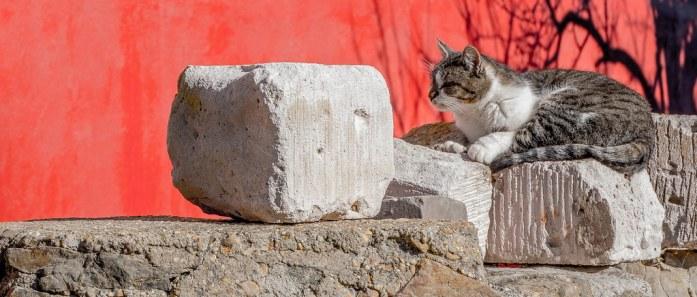 Gato descansando al sol