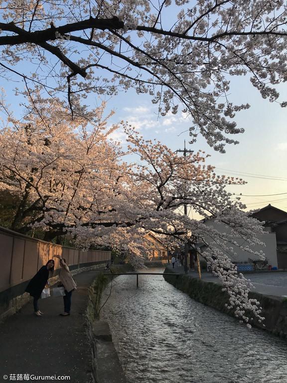 打工度假-京都生活-賞花、野餐-087
