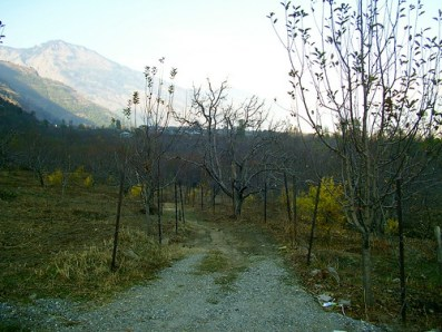 Himachali countryside in autumn.
