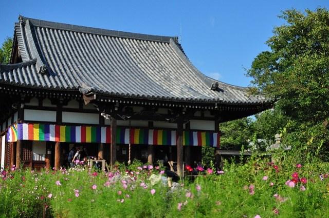 @Hannya-ji temple, Nara, 般若寺, コスモス寺