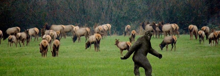 Latest photo of Bigfoot