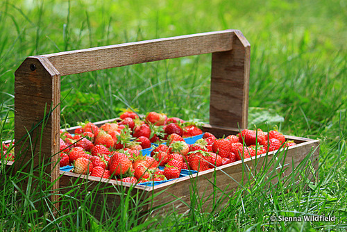Cycles of nature impact the foods we slice & serve. In the hotter months, fresh fruits, frozen treats, and outdoor BBQ's are summer staples!