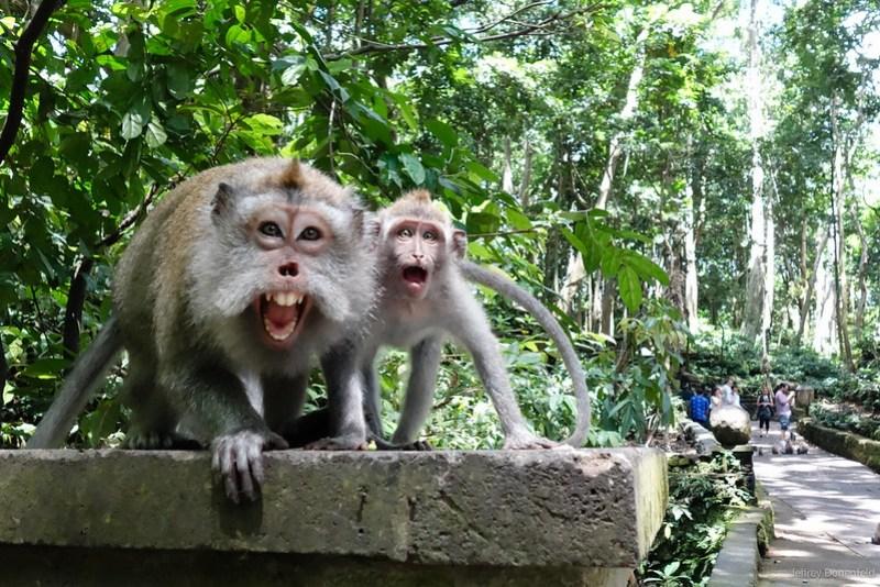 2013-03-22 Monkey Forrest Ubud - DSC00841-FullWM