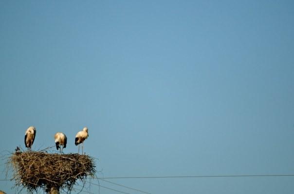 Three Storks, One Nest