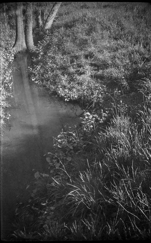 meadow, creek, tree trunks, reflections, Biltmore Estate, Asheville, NC, Argus A3 50mm f-4, Kodak TMAX 400, Ilford Ilfosol 3 developer, 2.27.18