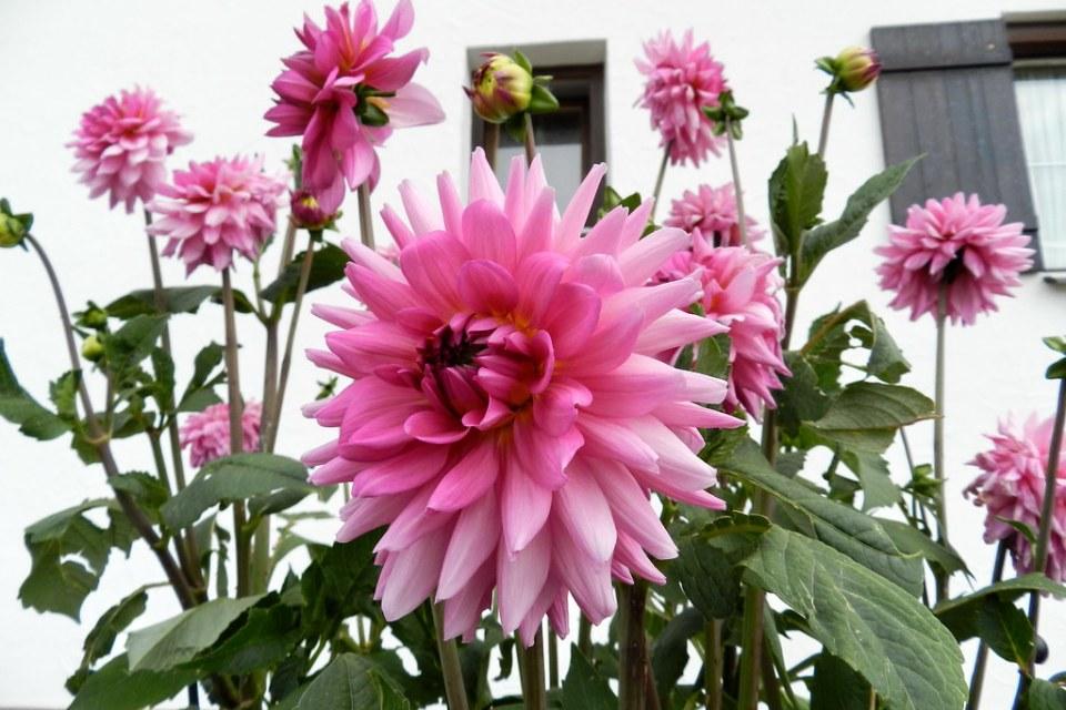flores ruta romántica Baviera Alemania 20