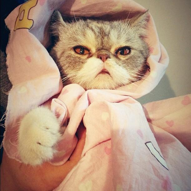 cute cat shanghai winter 盖文的猫