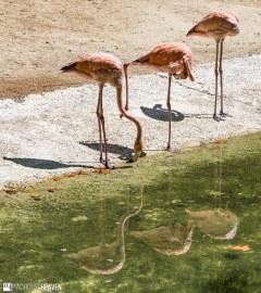 Barcelona Zoo - 0163