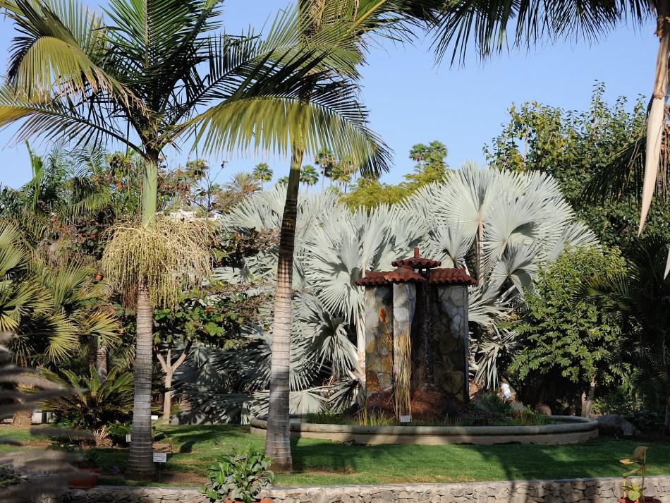 257-20120201_Gran Canaria-Maspalomas-Botanical Garden