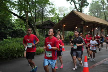 Safari Zoo Run 2013