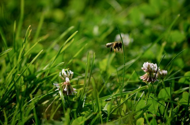 Bee Fly By