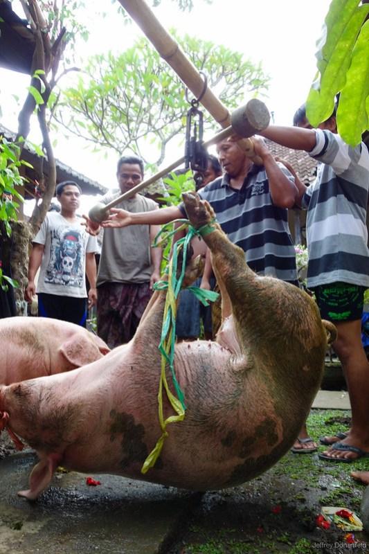 2013-03-13 Pig Slaughter - DSC00818-FullWM