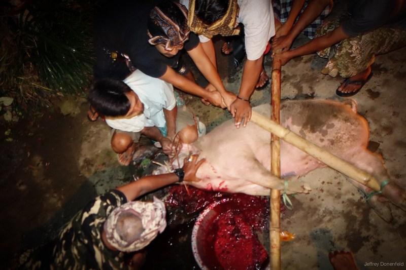 2013-03-13 Pig Slaughter - DSC00960-FullWM