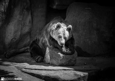 Barcelona Zoo - 0182
