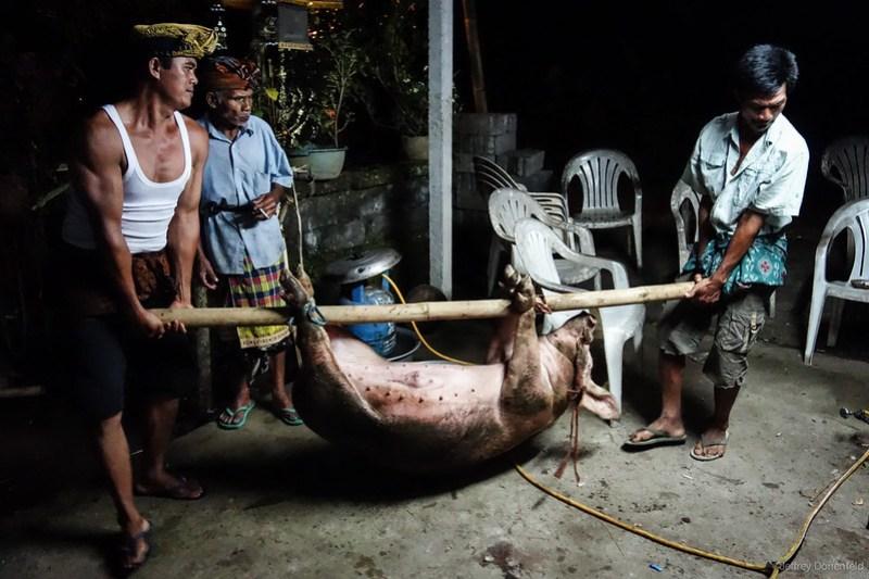 2013-03-13 Pig Slaughter - DSC00892-FullWM